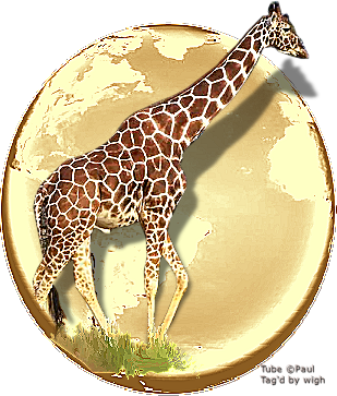 SHOW YOUR ANIMAL TAGS HERE - Page 14 1%20ootw%20giraffe%20done